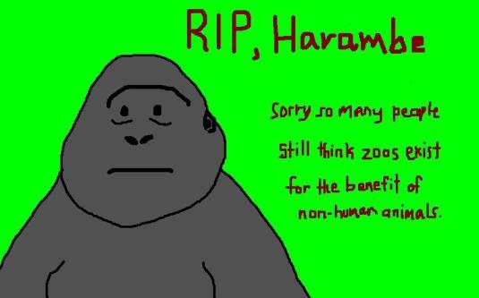 harambe 2